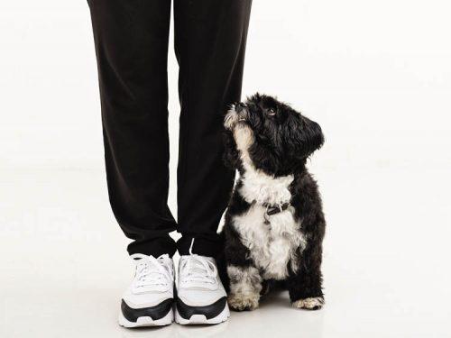 enetime med din hund